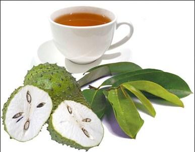 Benefits of Soursop Leaf